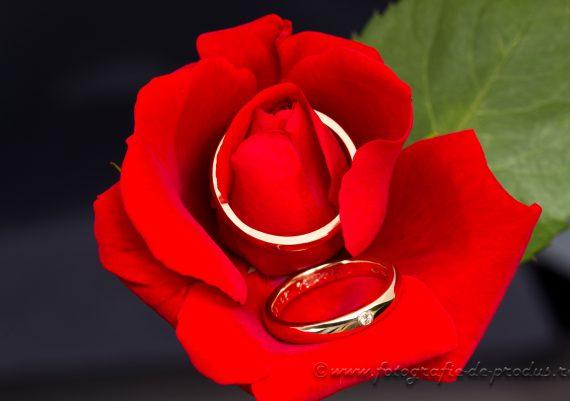 Fotografie bijuterii pe trandafir rosu si fundal negru, pereche verighete cu diamant